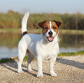 DOG 02 CB0087 01