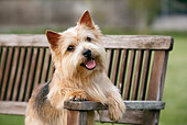 DOG 02 CB0092 01