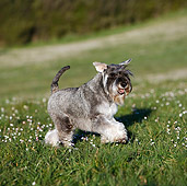 DOG 02 CB0095 01