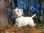 DOG 02 CB0098 01