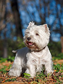 DOG 02 CB0099 01