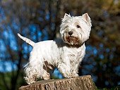 DOG 02 CB0101 01