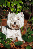 DOG 02 CB0105 01