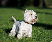DOG 02 CB0107 01