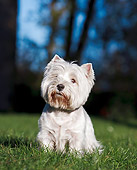 DOG 02 CB0111 01