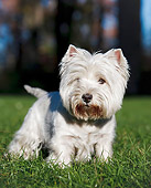 DOG 02 CB0116 01