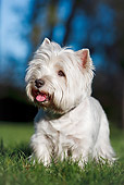 DOG 02 CB0118 01