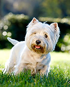 DOG 02 CB0120 01