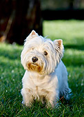 DOG 02 CB0124 01