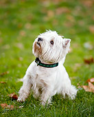 DOG 02 CB0127 01