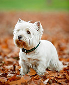 DOG 02 CB0128 01
