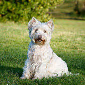 DOG 02 CB0129 01
