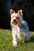 DOG 02 CB0130 01
