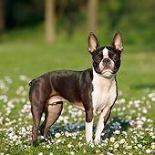 DOG 02 CB0136 01