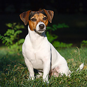 DOG 02 CB0142 01