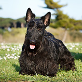 DOG 02 CB0165 01