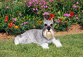DOG 02 CE0148 01