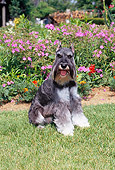 DOG 02 CE0149 01