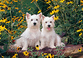 DOG 02 CE0154 01