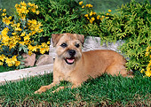 DOG 02 FA0056 01