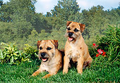 DOG 02 FA0057 01