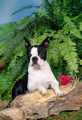 DOG 02 FA0058 01