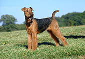 DOG 02 FA0059 01