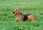 DOG 02 FA0060 01