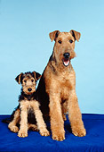 DOG 02 FA0063 01