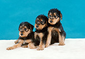 DOG 02 FA0064 01