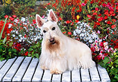 DOG 02 FA0067 01