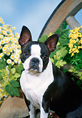 DOG 02 FA0072 01
