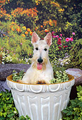 DOG 02 FA0073 01