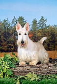DOG 02 FA0075 01