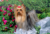 DOG 02 FA0078 01