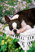 DOG 02 FA0082 01