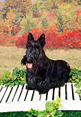 DOG 02 FA0083 01