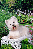 DOG 02 FA0084 01