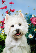 DOG 02 FA0085 01