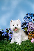 DOG 02 FA0087 01