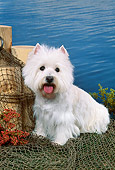 DOG 02 FA0093 01