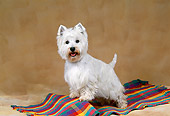 DOG 02 FA0094 01