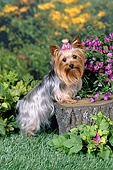 DOG 02 FA0100 01