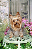 DOG 02 FA0102 01