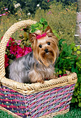 DOG 02 FA0103 01