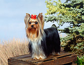 DOG 02 FA0108 01