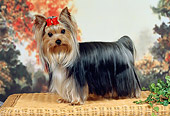 DOG 02 FA0109 01