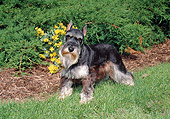 DOG 02 FA0112 01