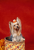 DOG 02 FA0113 01