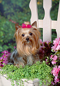 DOG 02 FA0117 01